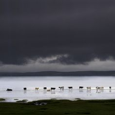 Landscape photograph for sale of cows on the shore of Loch Indaal in Scotland by Charlie Waite. Dramatic x stormy landscape picture for sale from Charlie Waite Photography. Creative Landscape, Landscape Prints, Photography Gallery, Image Photography, Inspiring Photography, Inspiring Art, Photography Ideas, Best Photographers, Landscape Photographers