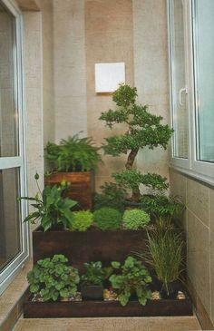 зимний сад на балконе фото: 14 тыс изображений найдено в Яндекс.Картинках