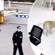 Sesat Dan Tidak Berjumpa Dengan Pemiliknya Anjing Anjing Ini Dengan Bijak Datang Ke Balai Polis Untuk Meminta Bantuan
