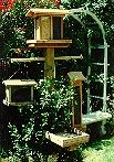 Picture of backyard wild bird feeding station