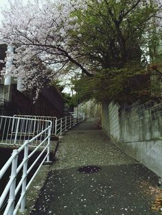 #Streetphotography #CherryBlossoms #Street in Kobe, Japan, April 5, 2014 | EyeEm