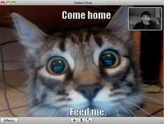 cat recognizes owner on video chat
