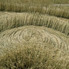 Crop circle photo by Steve Alexander
