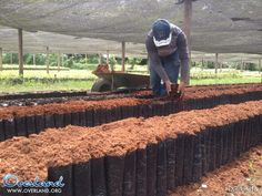 """Ultimi giorni in Bolivia. Sulla strada di rientro a La Paz, ci fermiamo presso una cooperativa di commercio equo e solidale di cacao: El Ceibo si propone di """"sviluppare con trasparenza ed efficienza la filiera produttiva del cacao biologico seguendo i principi di unità, sostenibilità, giustizia sociale ed equità"""". #Overland16"""