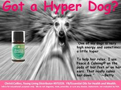 YLEO Peace and Calming for Dogs too.  To order: https://www.youngliving.com/signup/?site=US&sponsorid=1471893&enrollerid=1471893