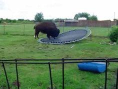 He just wants to bounce- Buffalo