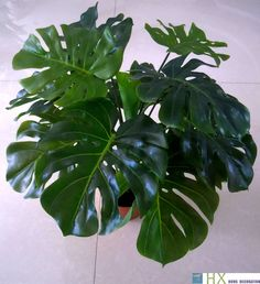Awesome Free Shipping(13 Leaves/pcs)Turtle Leaves Plants, Artificial Tree,Artificial