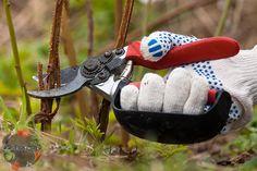 Как обрезать малину осенью – сроки, правила, схема, технология, когда и как правильно, высота обрезки малины, обычная и ремонтантная малина, старые кусты, однолетние побеги