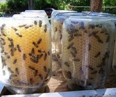 Keeping Bees is a goal of next year- I would love to have one regular box, and one with this set up, nice way to have it already ready to go for preservation, on the comb!