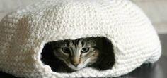 Kitty igloo