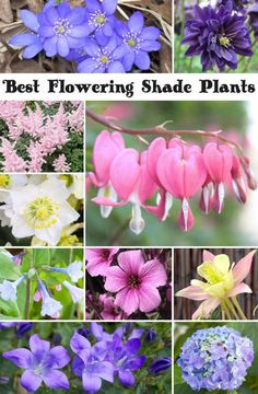 Best Flowering Shade