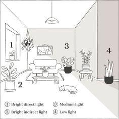 Indoor Garden, Garden Plants, Indoor Plants, Hanging Plants, Belle Plante, Pot Jardin, Low Light Plants, Plant Lighting, House Plant Care