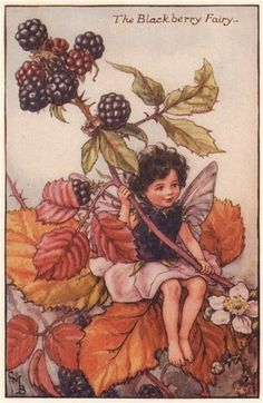 """Vintage print 'The Blackberry Fairy' (1935) by Cicely Mary Barker from """"The Book of the Flower Fairies""""; Poem and Pictures by Cicely Mary Barker, Published by Blackie & Son…"""