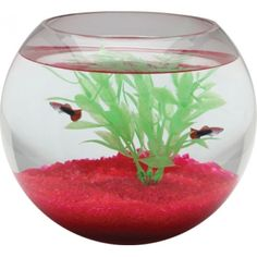 1 1-2 Gal Glass Bowl Sphere (Different sizes available)