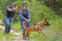 U.S. Navy Petty Officer 2nd Class Thomas Bohannon, left, and Seaman Sharon Berg follow military working dog, Axel, as part of a training exercise to patrol and scout on Naval Station Mayport, Fla., June 21, 2012. The military working dogs are trained to provide deterrence, drug or bomb detection and patrol services. U.S. Navy photo by Seaman Damian Berg