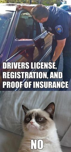 Grumpy cat therapy - I am so mad at the guy who got away with hitting our car, his insurance company and the cop are all crooked-grrrrrr