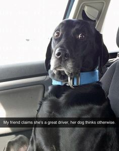 For evidence against yourself. | 32 Pics That Prove Every Pet Owner Should Use Snapchat #compartirvideos #funnypictures