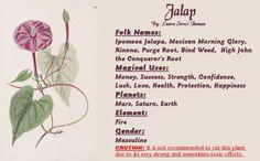 Jalap Magical Properties By: Laura Sireci Roman