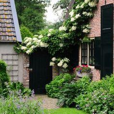 Poort tussen huis en garage, romantisch overgroeid met wit bloeiende klimhortensia.