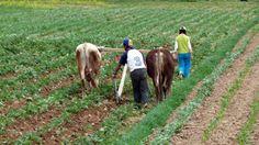 La agricultura en el Perú enfrenta retos enormes.