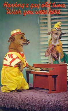 THE GAY DOG : Photo