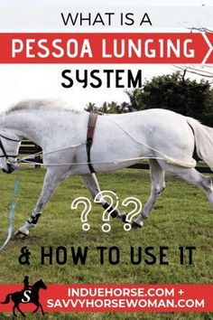 Guest post by Louise from In Due Horse. I was recently shown how to use a Pessoa lunging system on my horse and loved it! Equestrian Boots, Equestrian Outfits, Equestrian Style, Equestrian Fashion, Equestrian Problems, Horse Training, Training Tips, Training Exercises, Riding Hats