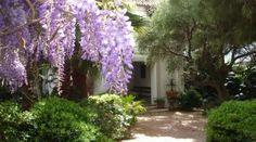 Beautiful houses for rent in Tarifa . the courtyard and the wisteria
