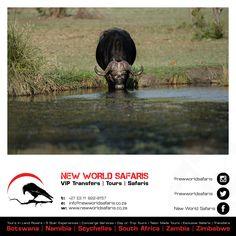 New World Safaris ------------------ VIP Transfers   Tours   Safaris ------ Follow us on Facebook facebook.com/newworldsafaris African Buffalo, Vip, Safari, Photographs, Wildlife, Tours, Facebook, Photos