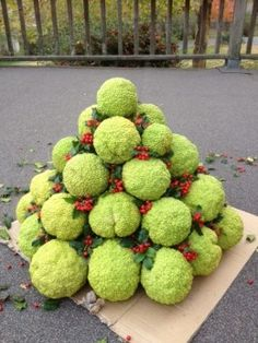 50 Hedge Apples Ideas Hedge Apples Apple Decorations Fall Decor