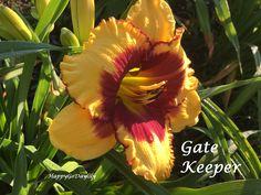 Gate Keeper photo by HappyGoDaylily