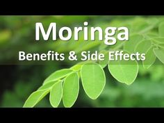 Moringa, an Ancient Tree of Life Used in Ancient Kamit / Egypt! Makes a Comeback! - YouTube