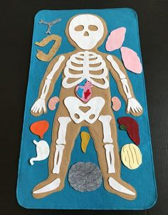 Discover the inside of the human body with this felt board anatomy set. Explore different organs and how they fit together to create organ system. This felt set will be a great addition to your other classroom sets. A fun way to teach young children about human anatomy. Made with wool felt. The toddler is about 26 long *In my years of experience teaching young children, this item has been the most popular and fun to talk, play and learn about human anatomy and the function of each organ....