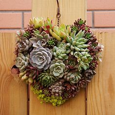 Metal Hanging Plant Basket Heart Shape Succulent Flower Pot Window Door Decor for sale online Succulent Hanging Planter, Succulent Display, Hanging Flower Baskets, Succulent Wreath, Flower Planters, Succulent Pots, Hanging Planters, Flower Pots, Indoor Succulents