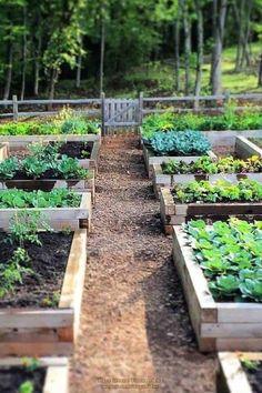 71 New Raised Bed Garden Design Ideas – Raised Garden Beds Veg Garden, Vegetable Garden Design, Garden Trellis, Garden Boxes, Garden Cottage, Vegetable Gardening, Garden Hedges, Veggie Gardens, Organic Gardening