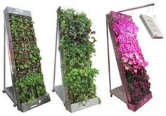 Edible Walls Inspire New Wave of Urban Agriculture