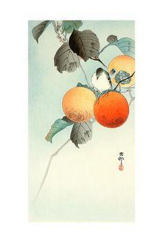 size: Giclee Print: Nuthatcher Atop Persimmon by Koson Ohara : Artists Rare Birds, Hanging Art, Botanical Art, Japanese Art, Framed Artwork, Vintage Art, Giclee Print, Art Prints, Persimmon Fruit