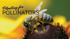 Bee a friend and plant for pollinators.