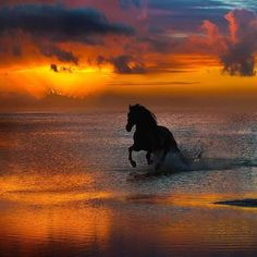 Pferde Bilder Beim Sonnenuntergang am Meer Horses pictures At sunset at the sea Cute Horses, Pretty Horses, Horse Love, Beautiful Horses, Animals Beautiful, Dark Horse, Black Horses, Beautiful Sunset, Horse Pictures