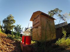 BoredPanda New Beehive Lets You Harvest Honey Automatically Without Disturbing Bees