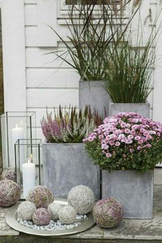 Group of galvanized container gardens