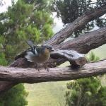 @LifeInfonatur 57min #Biodiversidad en #rednatura2000 de la UE. Madeira #Portugal. Vía @Arturo Larena @activarednatura @Noticias ambientales y sostenibles Efeverde #avifauna pi...