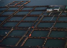 Fish farm on Wando Island, South Korea