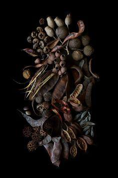 seeds   STILL  (mary jo hoffman)