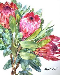 Protea Watercolor Print Watercolor Protea Painting Home Decor Floral Illustration Protea Art Protea Plant Wall Art Protea Giclee Art Print Protea Art, Protea Flower, Art Watercolor, Watercolor Flowers, Flower Art Drawing, Drawing Art, Australian Art, Botanical Art, Art Projects