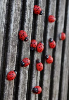 48 mini wooden ladybugs / ladybird shapes with sticky tabs on bottom