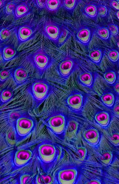Peacock Feathers in Blue and Pink. Art Print by Chris Thaxter - X-Small Pink Peacock, Peacock Decor, Peacock Colors, Peacock Art, Peacock Feathers, Purple, Peacock Images, Peacock Photos, Cute Wallpaper Backgrounds