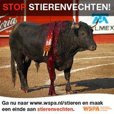 Help ons stierenvechten te stoppen! Ga naar www.wspa.nl/stieren en repin. Animal Cruelty, Animal Welfare, Pet Care, Horses, Animal Care, Spirit Guides, Animals, Taurus, Animales