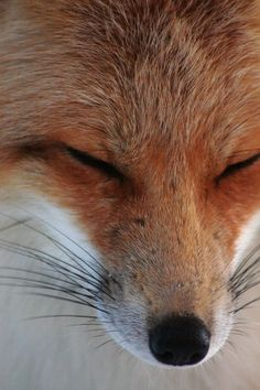 Red Fox bliss!...