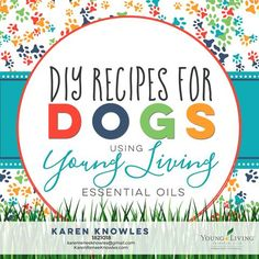 oil for dogs How To Use Essential Oils On your Dogs With DIY Recipes How to Use Essential Oils in Your Dogs Do It Yourself with Recipes - Karen Renee Knowles Essential Oils For Babies, Citrus Essential Oil, Essential Oil Diffuser Blends, Pure Essential Oils, Young Living Essential Oils, Young Living Pets, How To Make Oil, Oils For Dogs, Diffuser Recipes
