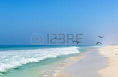 Beach of Salalah with seagulls, Dhofar  Oman